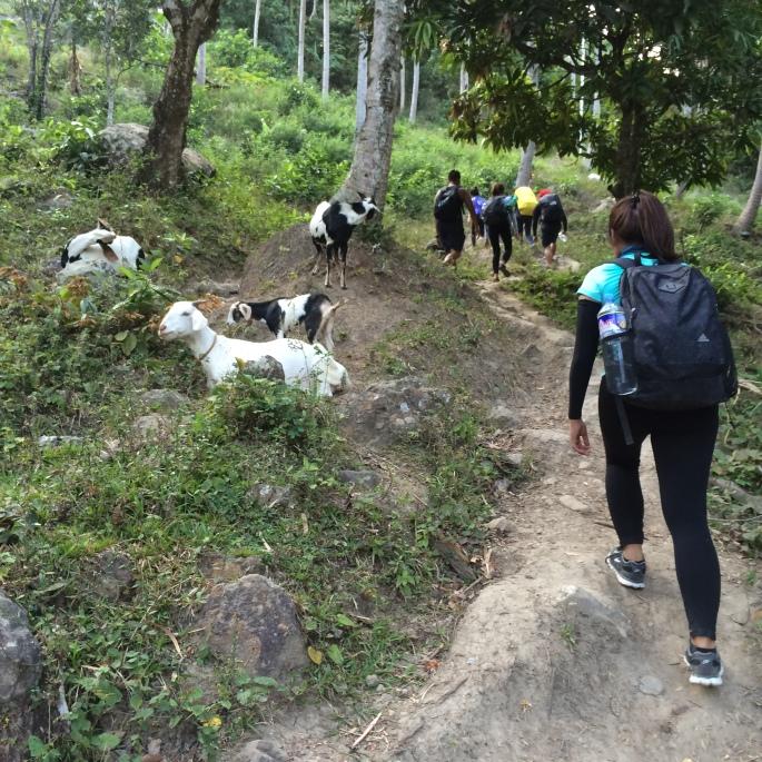 goat daguldol trail
